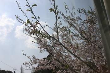 Sakura_0407e1